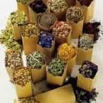 herbs15
