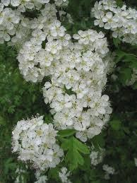 herbs6