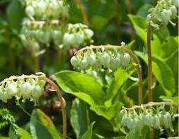 травы полезны для женского здоровья